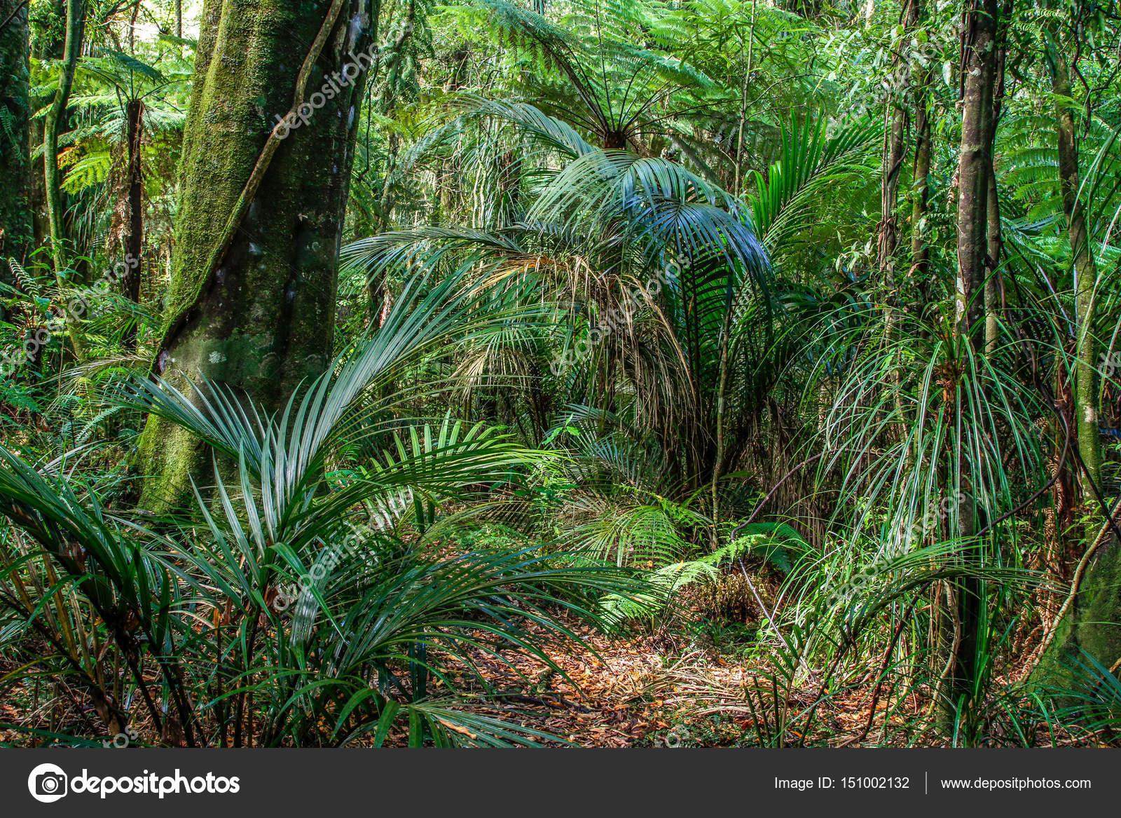Деревья джунглей. Деревья и папоротники в