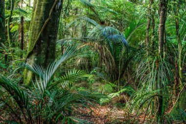 Trees and ferns in jungle
