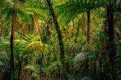Tropical jungle greenery