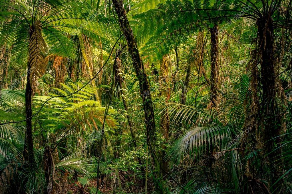 Tropical jungle greenery