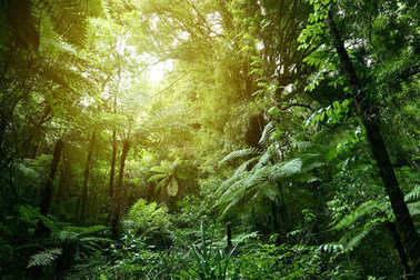 Sunlight in jungle
