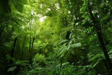 Tree ferns in jungle