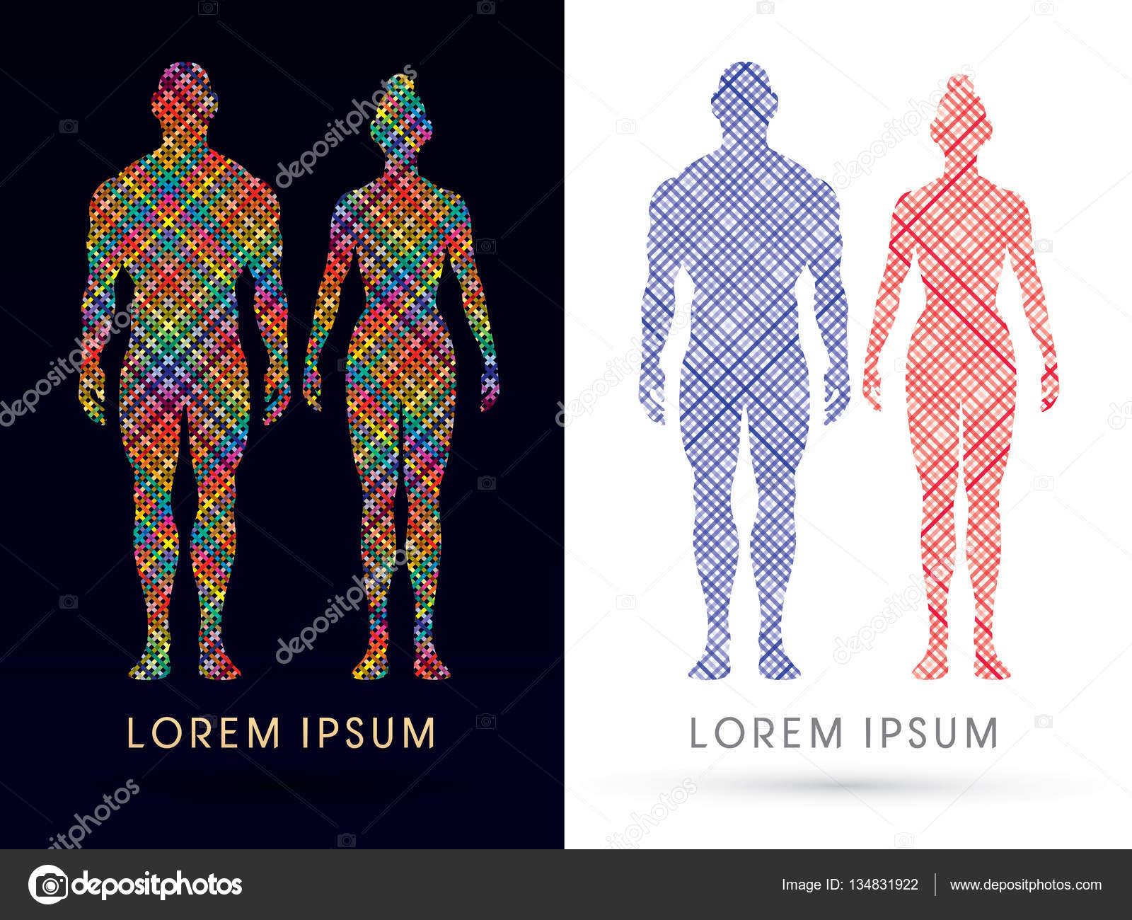 Anatomía femenina y masculina — Vector de stock © sila5775 #134831922