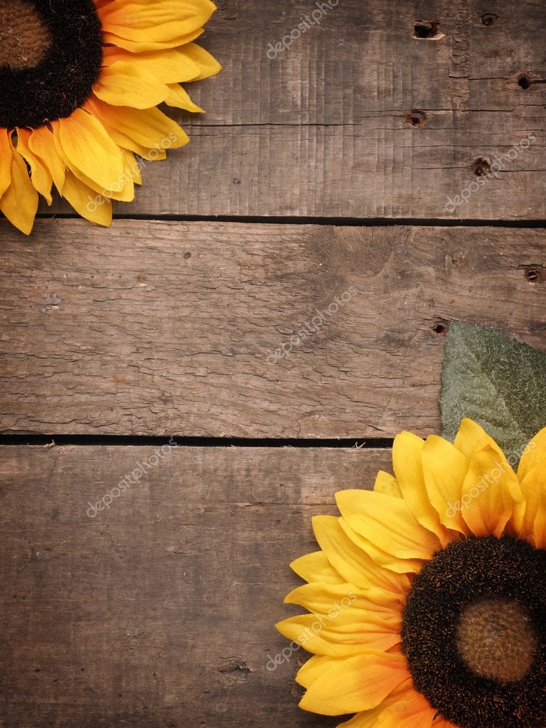 Two Sunflowers On A Rustic Wooden Background With Space For Text Seasonal Photo By Aberheide