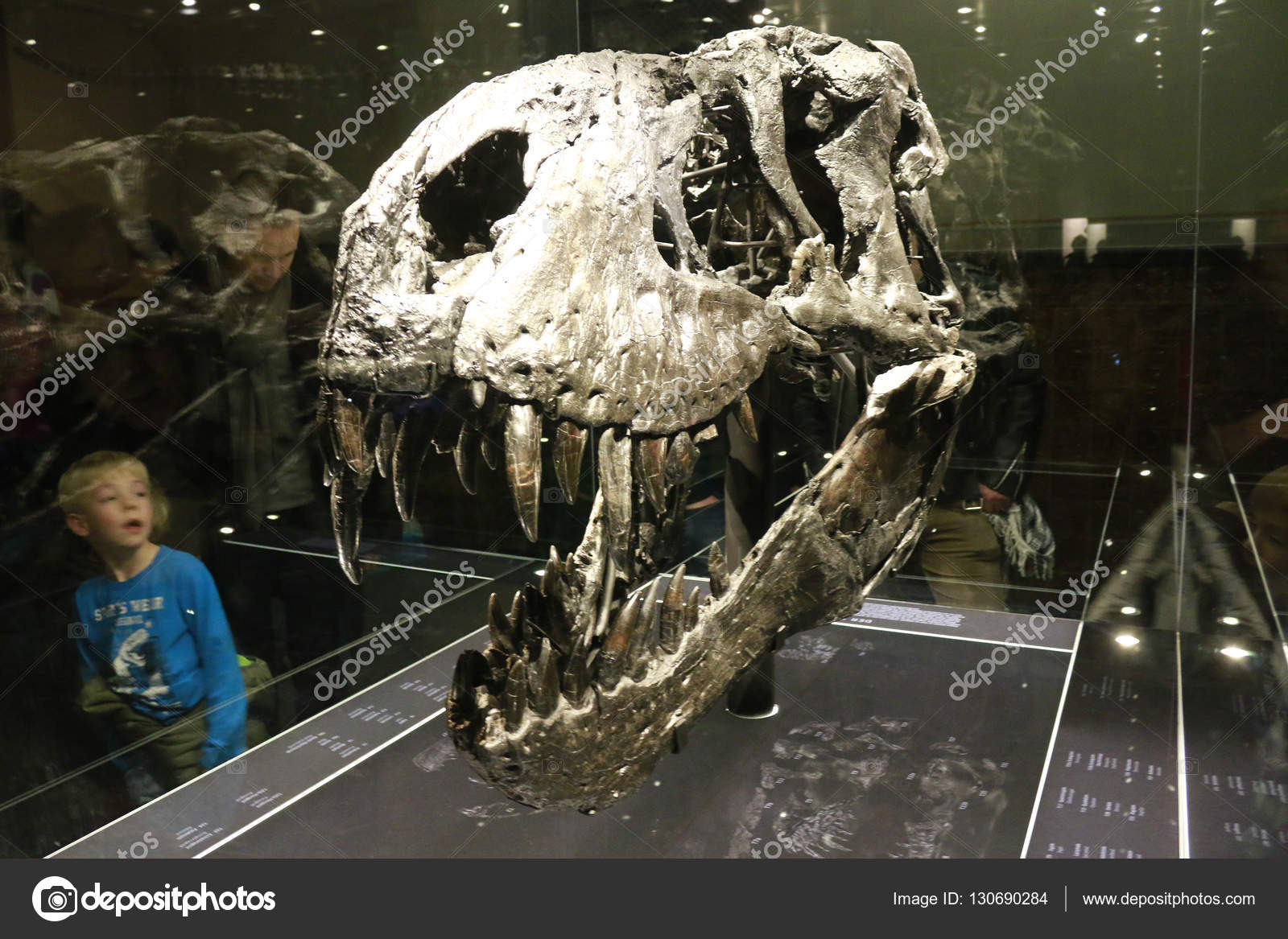 Skeleton of the tyrannus saurus rex tristan otto stock editorial december 2015 berlin the skeleton of the tyrannus saurus rex tristan otto on display at the museum of natural history berlin photo by 360ber thecheapjerseys Image collections