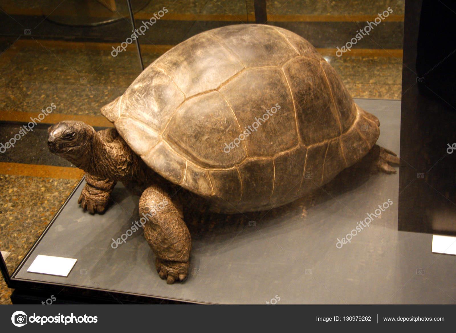 Schildkröte Ausstellung Im Museum Of Natural History