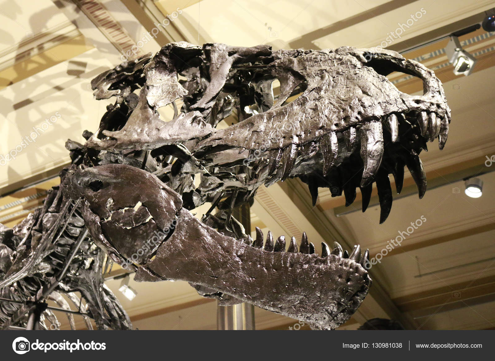 Skeleton of the tyrannus saurus rex stock editorial photo 360ber berlin germany circa 2016 skeleton of the tyrannus saurus rex photo by 360ber thecheapjerseys Gallery