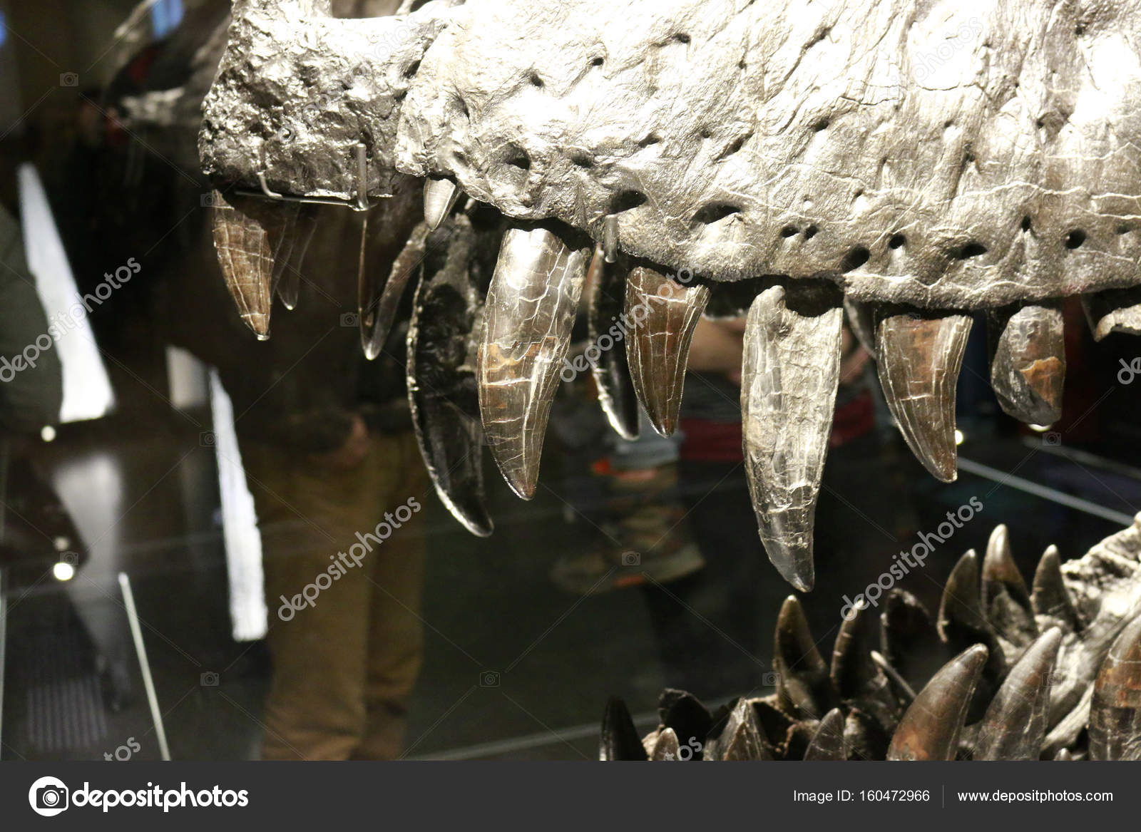 Natural history museum berlin stock editorial photo 360ber the head of the tyrannus saurus rex tristan otto natural history museum berlin photo by 360ber thecheapjerseys