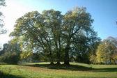 Fotografie große grüne Bäume