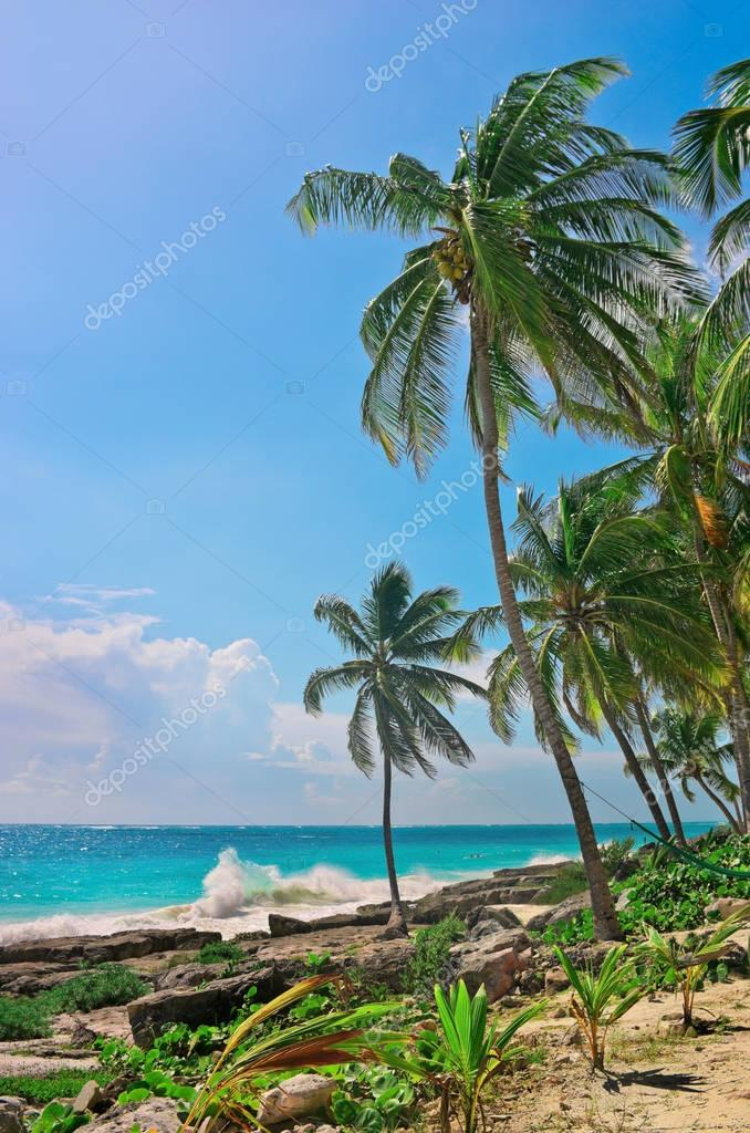 Tropical beach on caribbean sea.