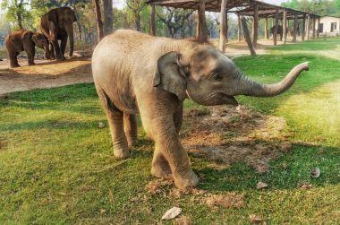 Little Elephant in Breeding Centre