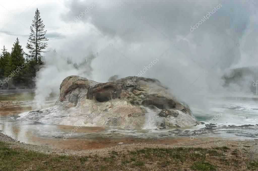 Grotto Geyser eruption  in Yellowstone National Park, USA