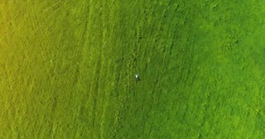 Vertical motion flight over businessman lying on fresh green meadow. Top view on relaxing man.
