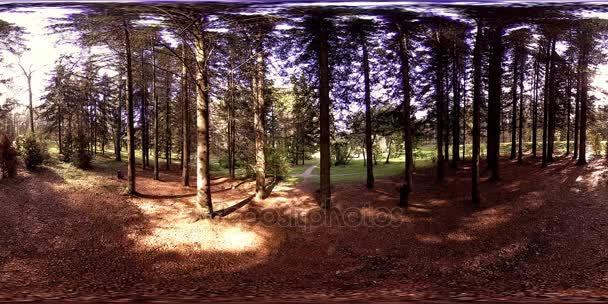 UHD 4K 360 VR A városi park szabadidős területének virtuális valósága. Fák és zöld fű ősszel vagy nyáron