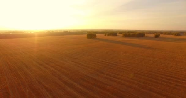 UHD 4K aerial view. Mid-air flight over yellow wheat rural field