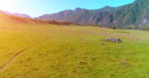 Repülés alatt vad lovak állomány réten. Tavaszi hegyek vad természet. Szabadság ökológia fogalma.