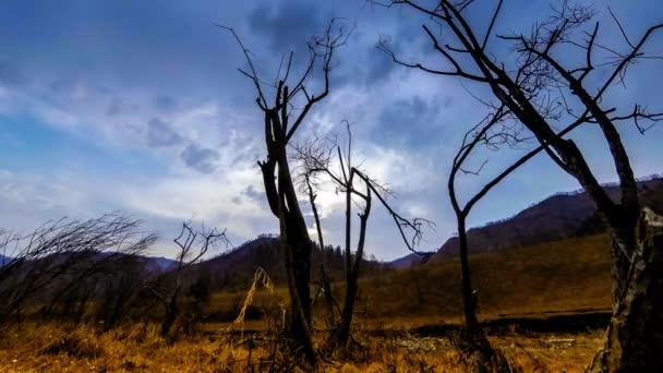 Zeitraffer von Todesbaum und trockenem, gelbem Gras in bergiger Landschaft mit Wolken und Sonnenstrahlen. horizontale Schieberbewegung