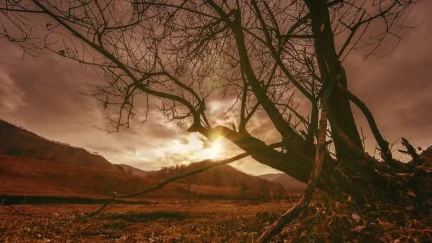 Idő telik el a halál fa és száraz sárga fű a mountian táj, a felhők és a nap sugarai. Vízszintes csúszik-mozgalom