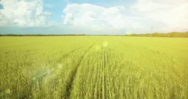 Letecký pohled na rozlišení 4k. Nízký let po zelené a žluté pšeničné venkovské oblasti