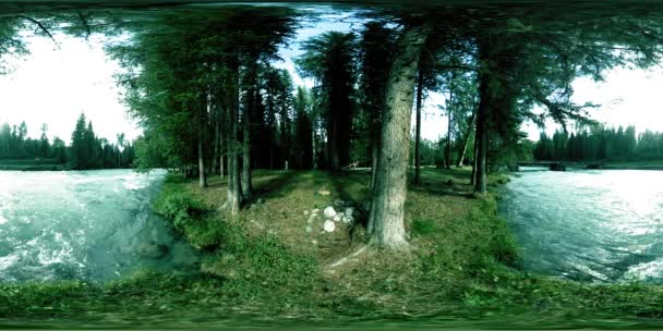 360 VR virtual reality of a wild forest. Pine forest, small fast, cold mountain river. National park.