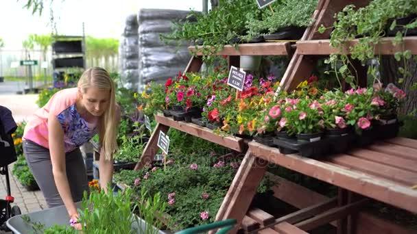žena výběr Petúnie květiny na zahradě školky uchovávat