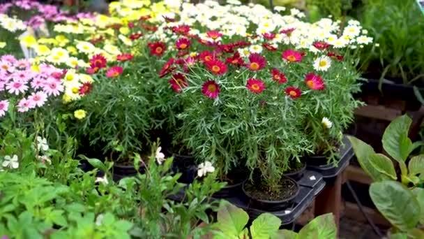 ruce si květináč v obchodě zahradní rostlina
