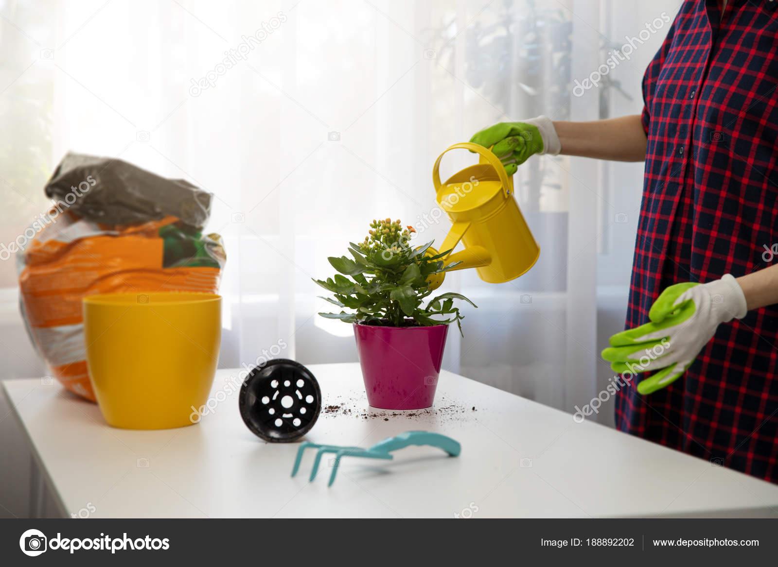 frau, bewässerung indoor-anlage nach der pflanzung im blumentopf