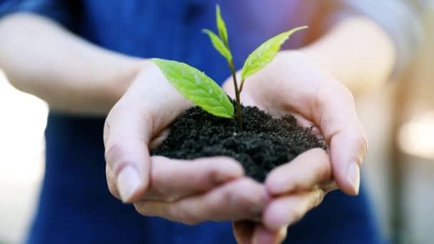 nový koncept zachování života a životního prostředí - žena držící mladou rostlinu s půdou v rukou
