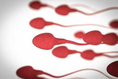 group of sperms