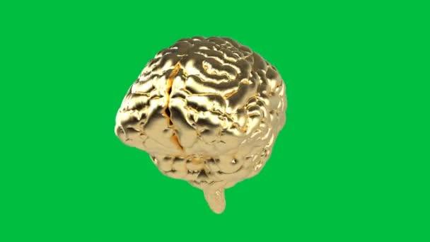 3d rendering golden human brain on green screen 4k animation