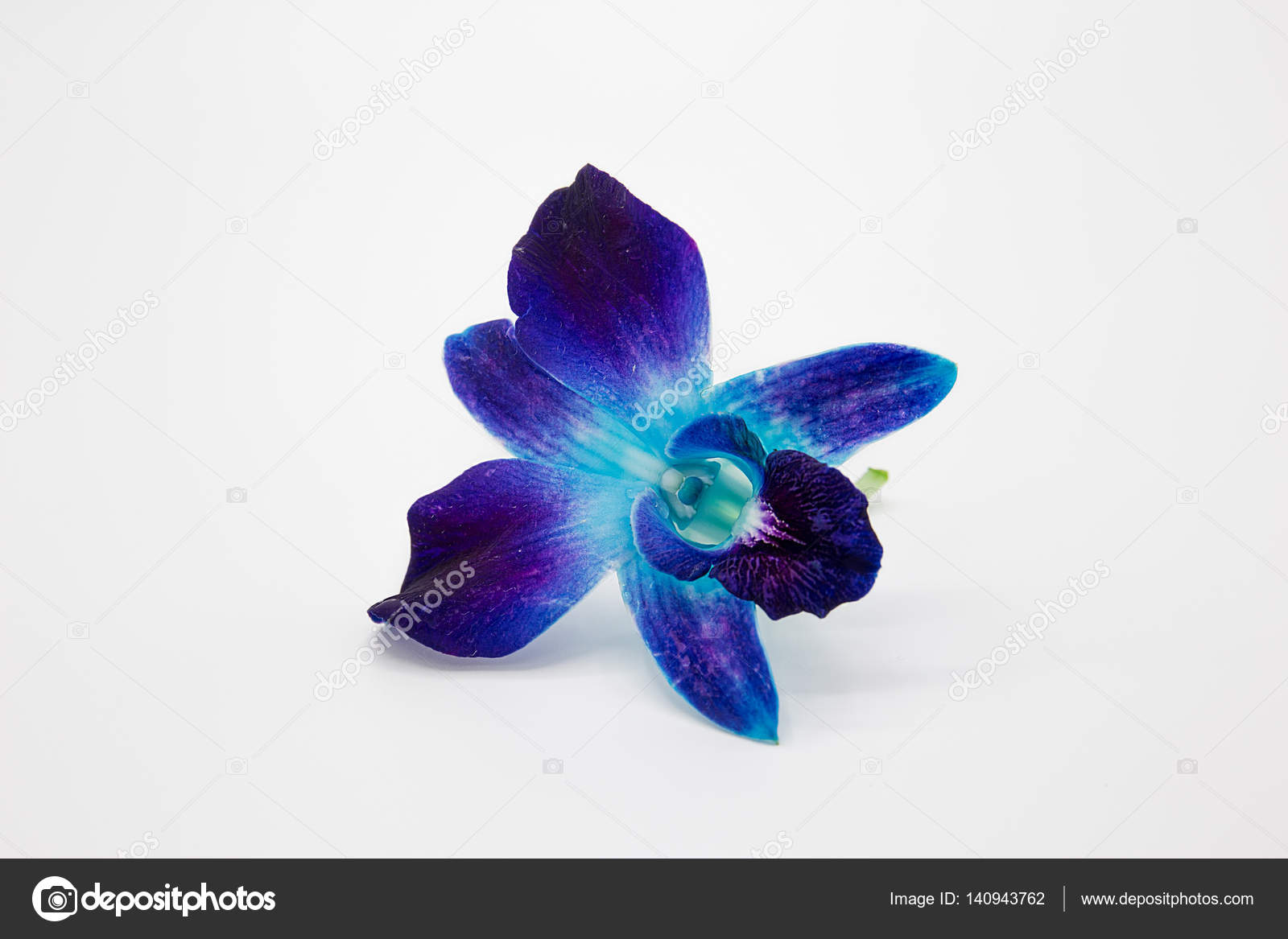 Deep Purple Blue Orchid Flower Isolated On White Background Stock