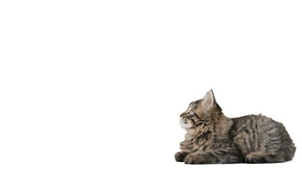 videa kočička