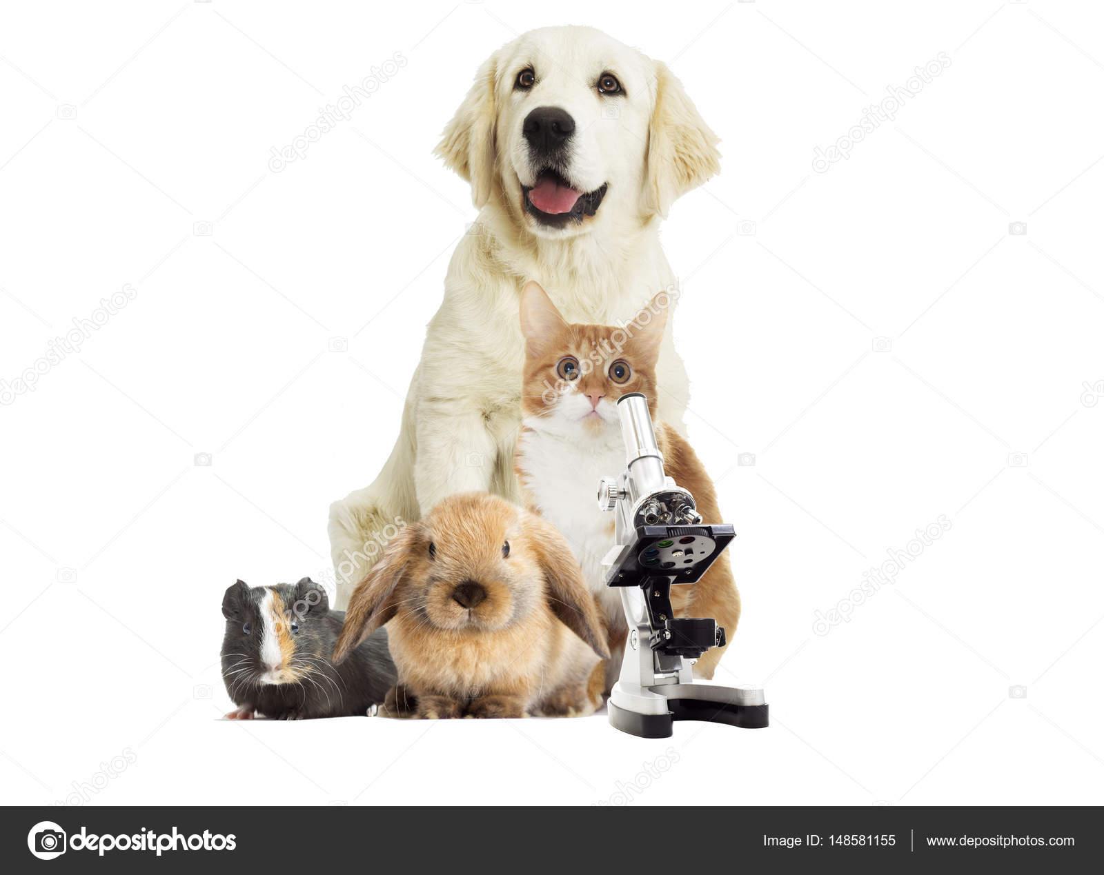 Gruppo Di Animali Domestici Su Sfondo Bianco Foto Stock