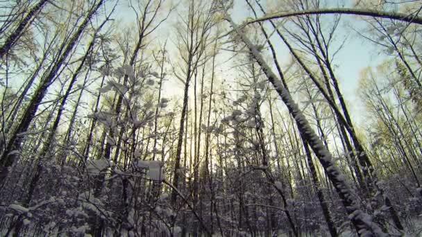 Zimní les. sníh, zima, zima