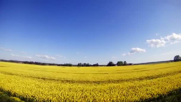Utazási mentén a mező, a sárga virágok.