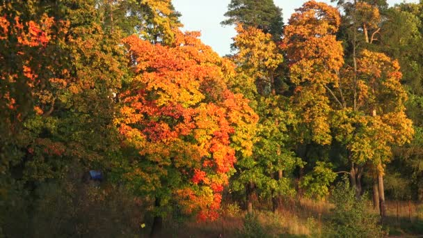 Podzimní les. Podzimní krajina. 4k.