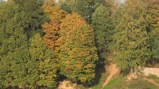 Podzimní les. Podzimní krajina. 4k
