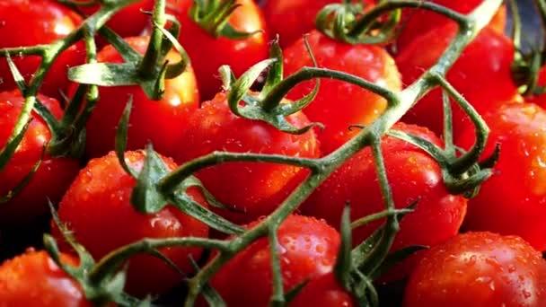 Frische rote reife Tomaten zum Kochen