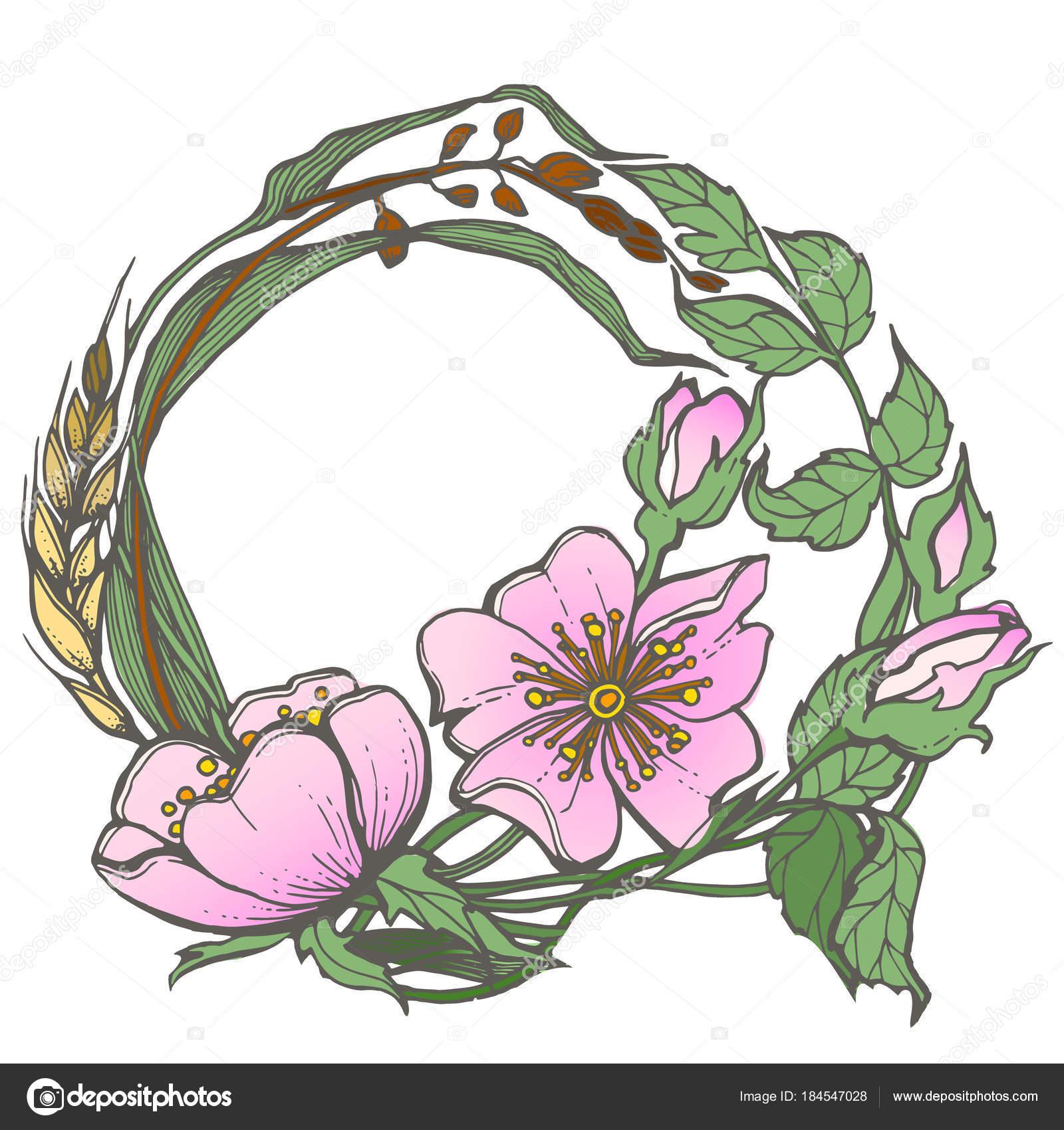 Wilden Heckenrose Blumen Rahmen Kontur Tinte Erwachsene Malvorlagen ...