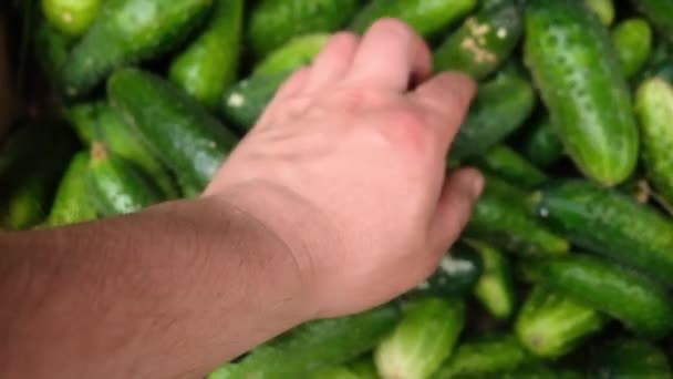 farmer collects cucumbers in a box
