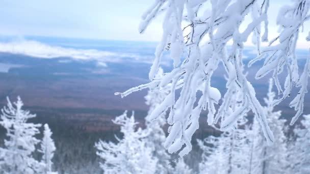 Zasněžená větev. Zimní krajina