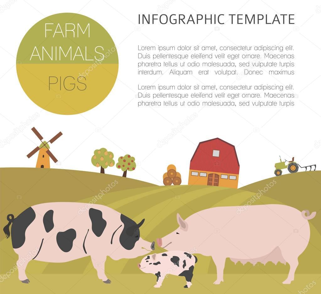 Cerdo agricultura infografía la plantilla. Cerdo, cerda, cerdo ...