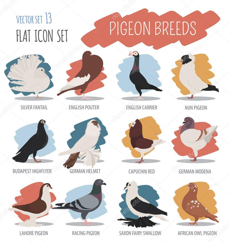 가금류 농업입니다. 비둘기는 아이콘 세트를 낳습니다. 평면 디자인
