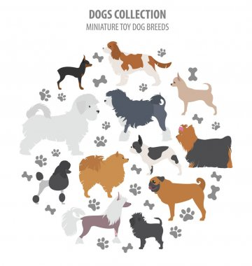 Miniature toy dog breeds collection isolated on white. Flat styl
