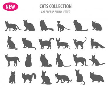 Cat breeds icon set flat style isolated on white. Create own inf