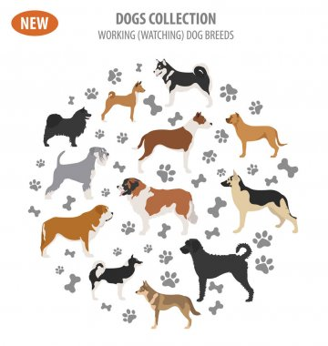 Working, watching dog breeds,  set icon isolated on white . Flat
