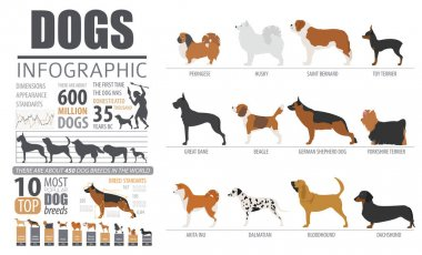Dog info graphic template. Puppy breeds, pet isolated on white