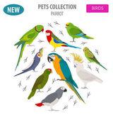 Parrot breeds icon set flat style isolated on white. Pet birds c