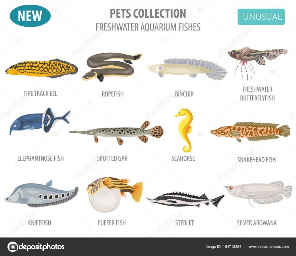 Freshwater aquarium fish types 1000 aquarium ideas for Fish tank fish types
