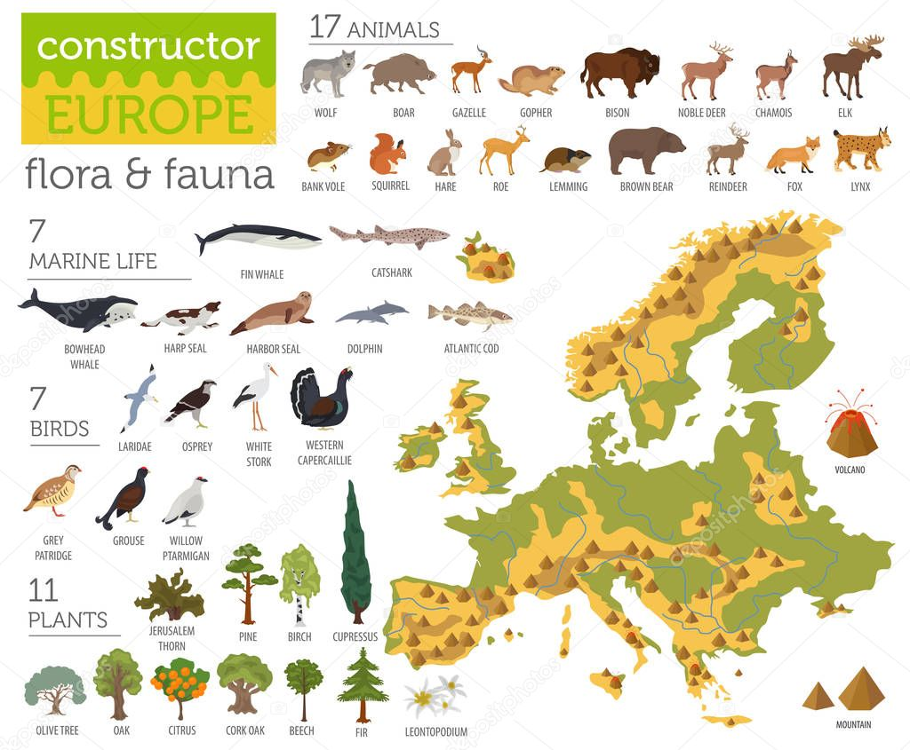 Flat European flora and fauna map constructor elements. Animals,